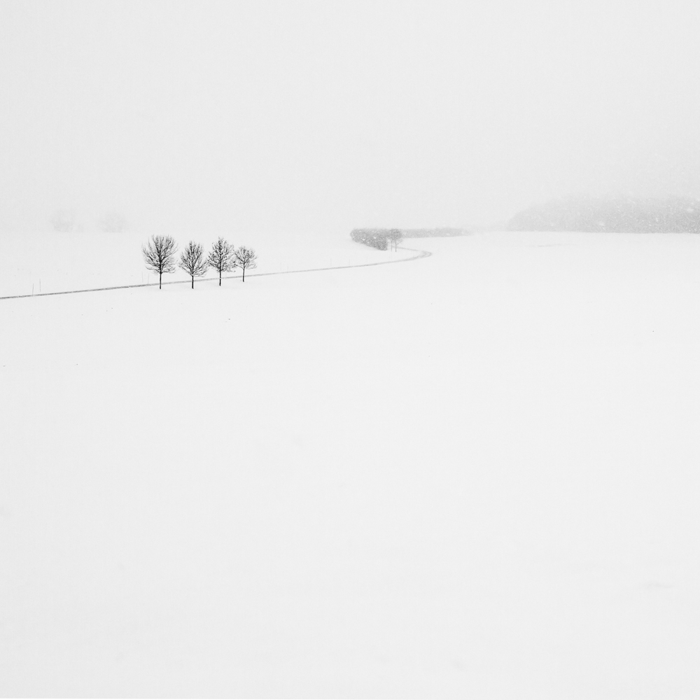 Four trees and a road in the snow