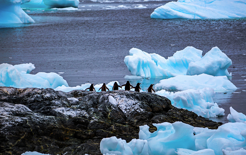 The Glacier and Penguins