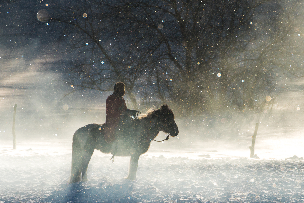 Winter Horseman