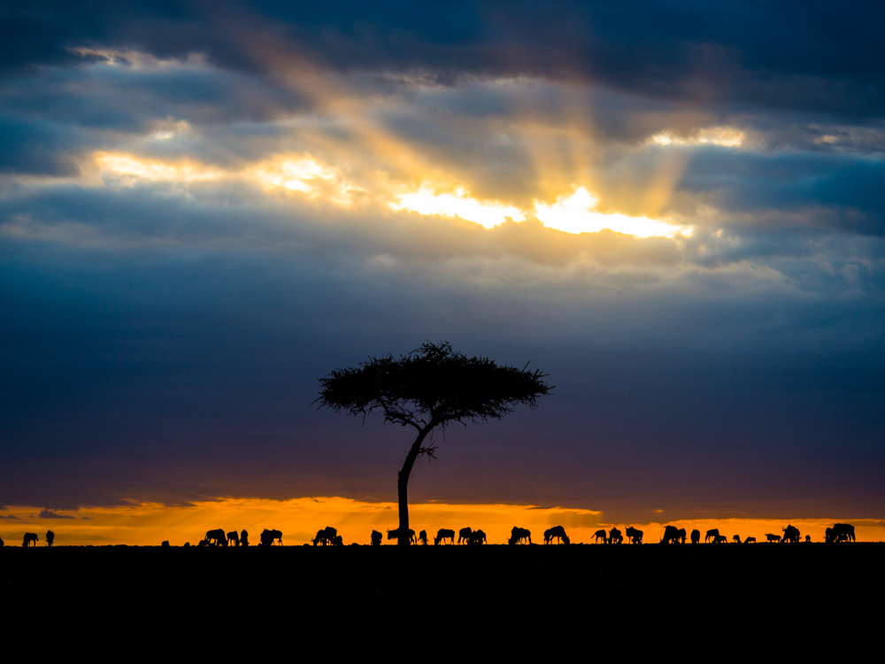 Oculus over the Maasai Mara