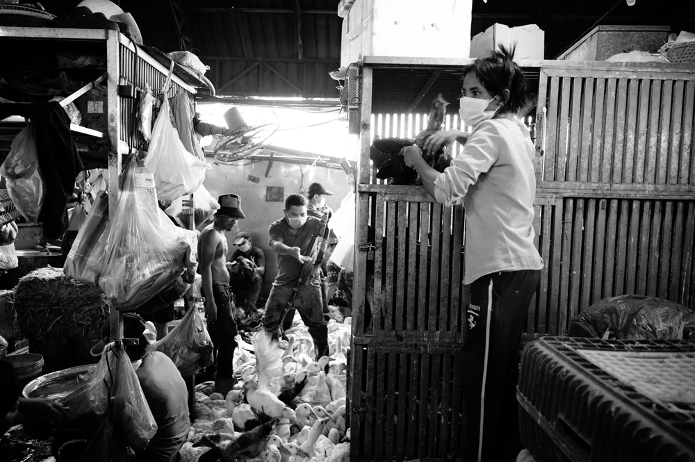 Chicken Market in Phnom Penh, Cambodia