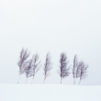 Seven Tress In Snow