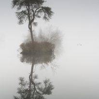 Mystical fens of Nothern Brabant (Province of the Netherlands)