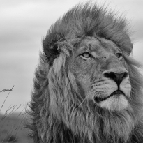 A portrait from the wilderness in black&white