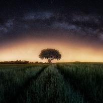 Milky way over lonely tree