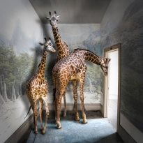 Dominion: Portraits of Animals in Captivity