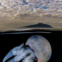 Jellyfish under the Vesuvio