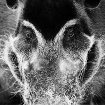 B & W WildLife Portraits