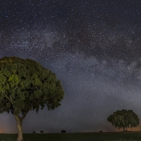 Milky Way over the holm oak meadow
