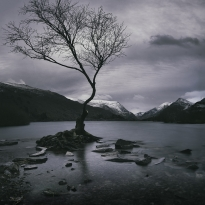 The Lone Tree revisited