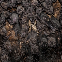 Bats in the bat cave