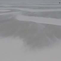 Penguins in a Sand Storm