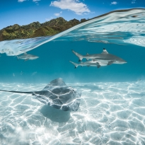 Under a wave in Moorea