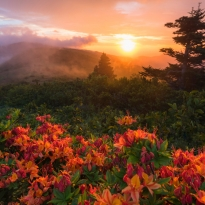 Experiencing EPIC - Flame Azaleas at Sunset