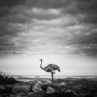 The Ostrich And The Sea